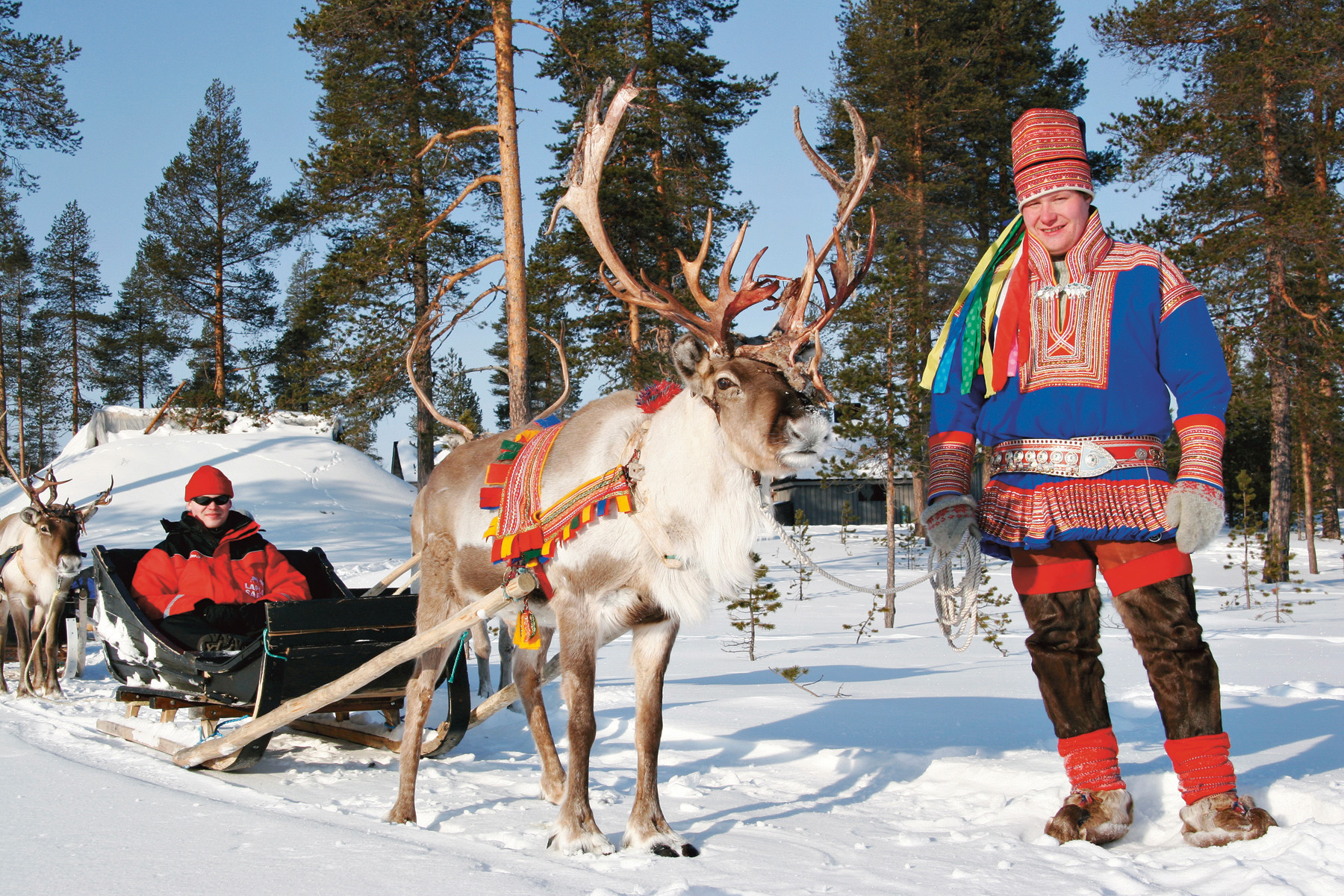 Reindeer_p85_1